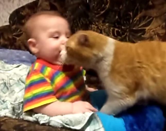 激しいチューをする猫。