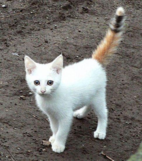 奇跡の三毛猫さん。