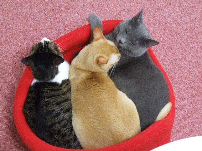 三色団子。