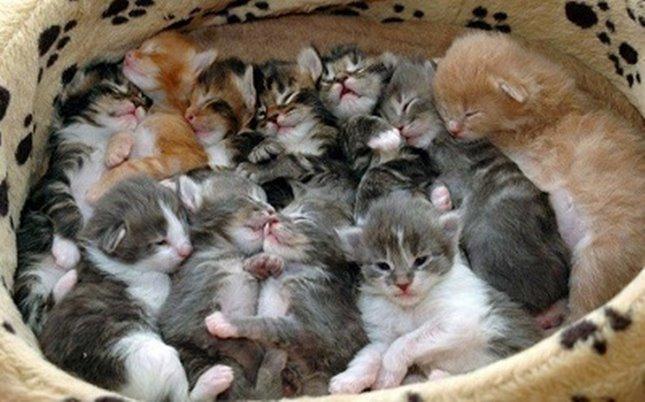 子猫いっぱい猫団子。