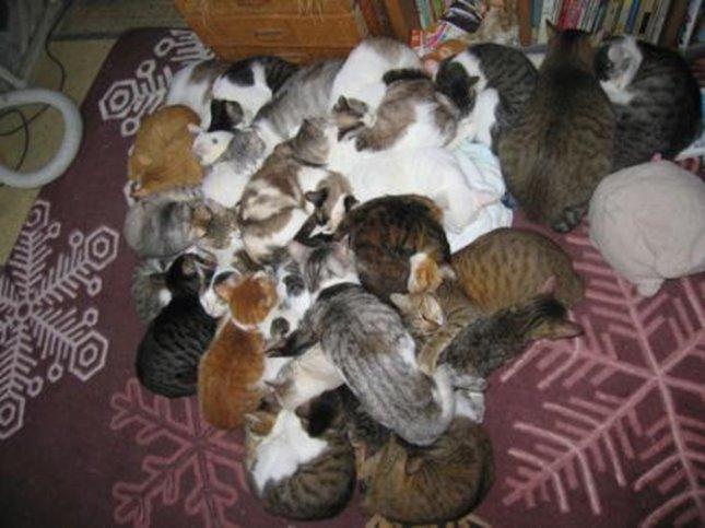 とにかく大きい猫団子。