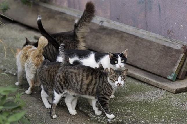江ノ島も猫島。