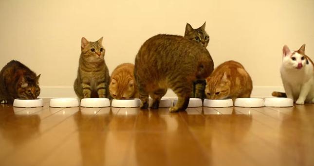 スタンバイを開始する猫達。