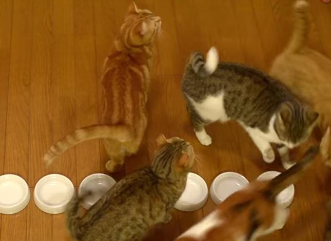 並んでご飯を食べる猫達。