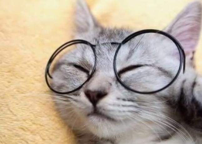 カワイイ丸メガネ。