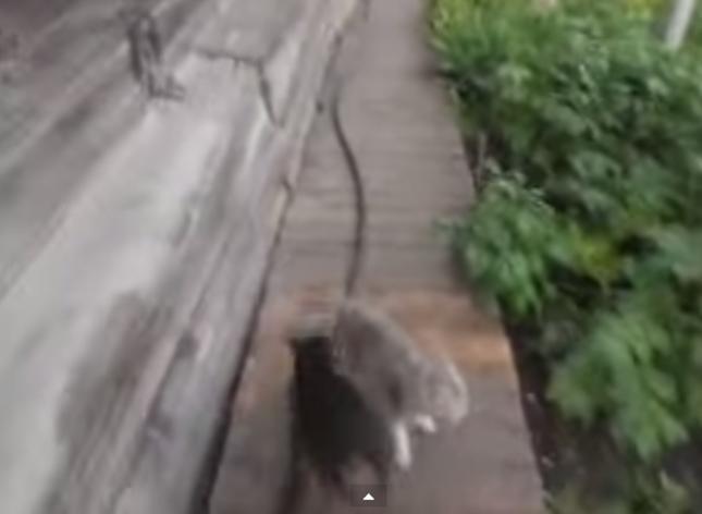 散歩を楽しんだ犬と猫。