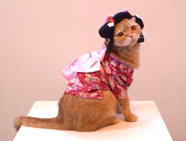 麗しき猫姫さま。