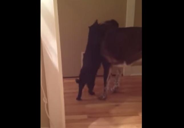 犬を抱きしめる猫。