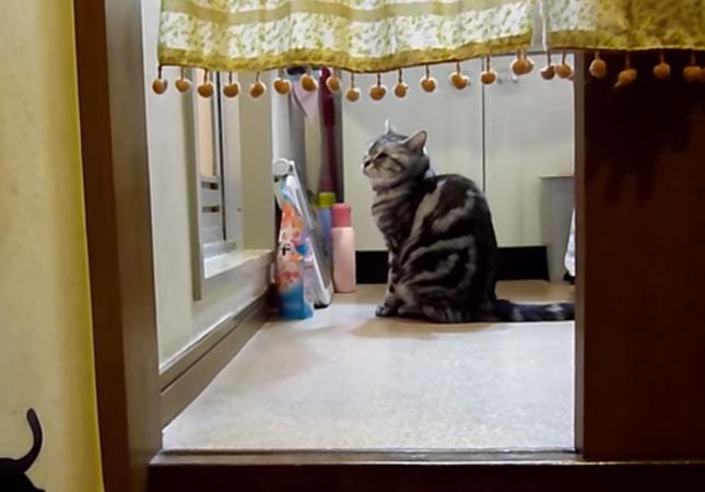 風呂あがりを健気に待つ猫。