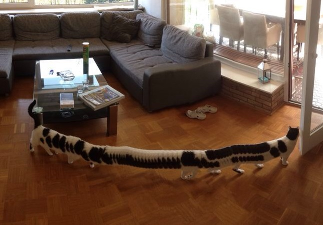 超ロング猫。