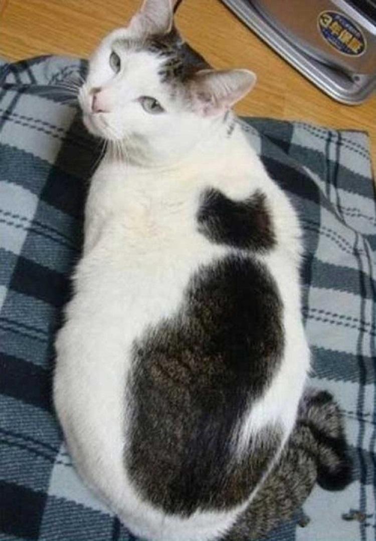 猫の中の猫!