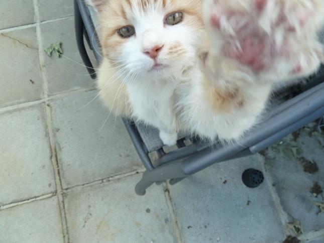 猫パンチでパシャリ。