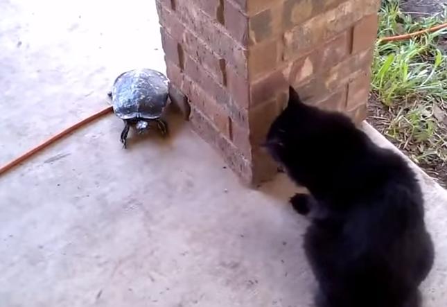 猫と亀の鬼ごっこ