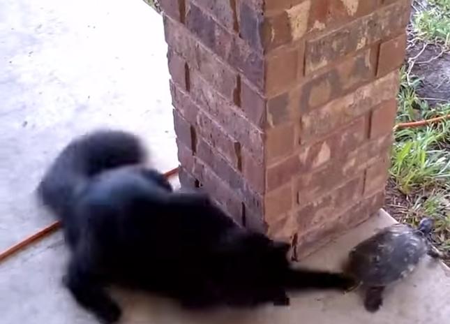 猫パンチでタッチ!