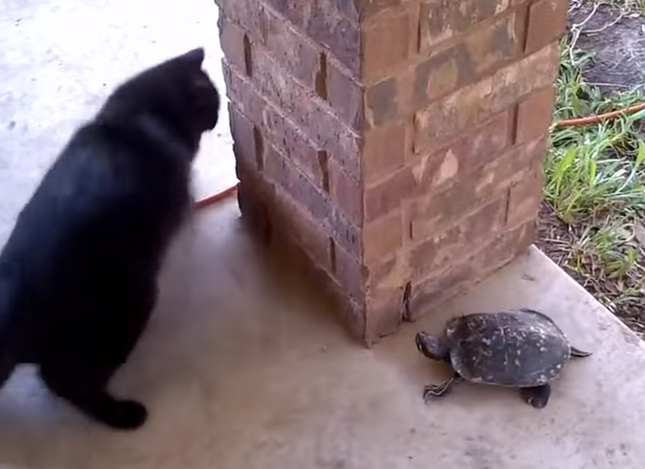 逃げる猫に追う亀