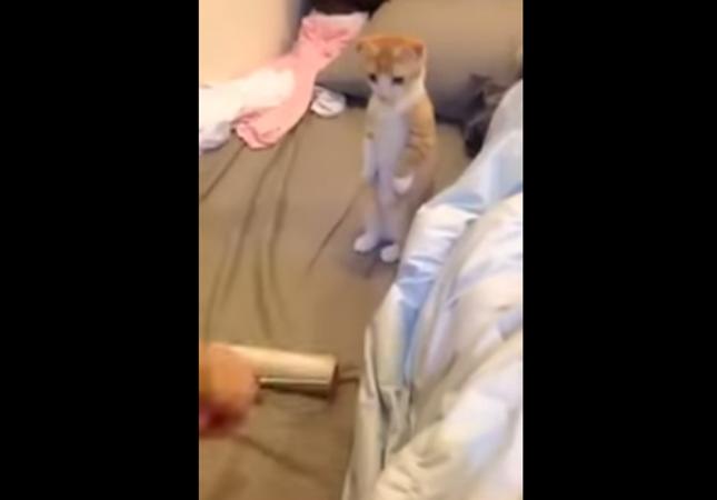 立ち見客:子猫