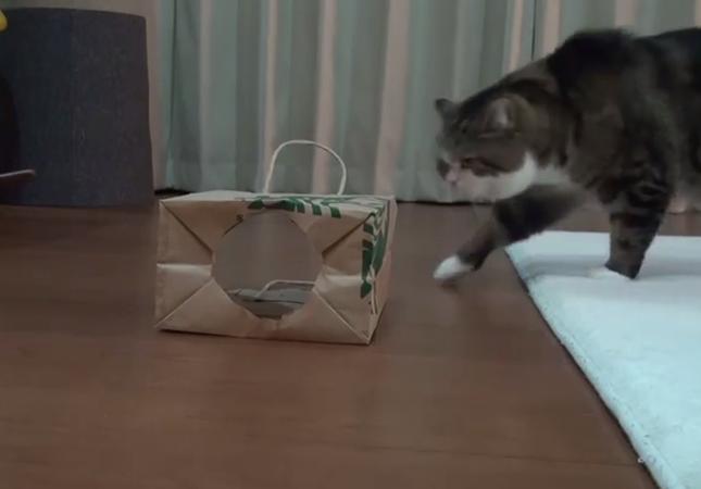 袋を発見!