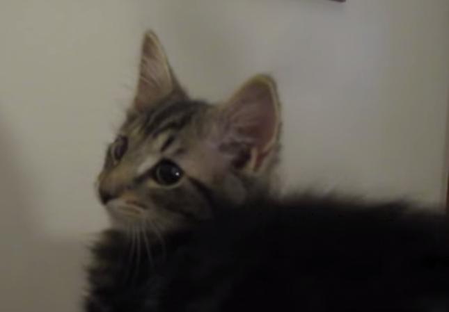 とっても美猫さん。