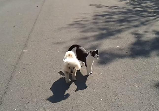散歩をする犬と猫。