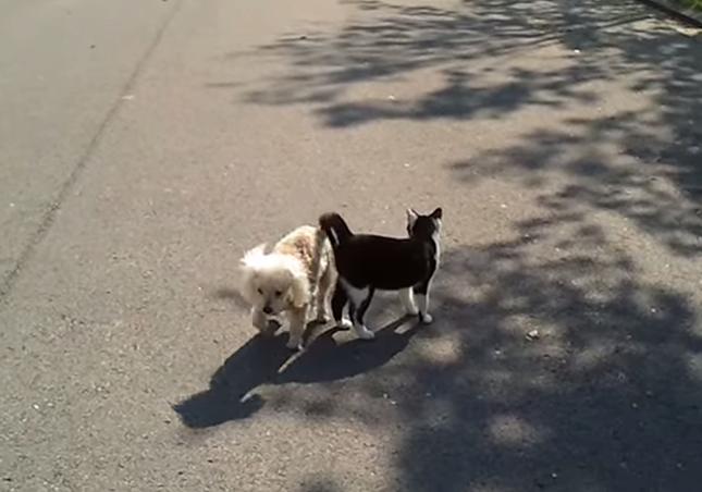 周りを警戒する猫。