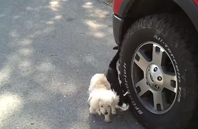 犬が障害物にあたらないよう、体を挟む猫。