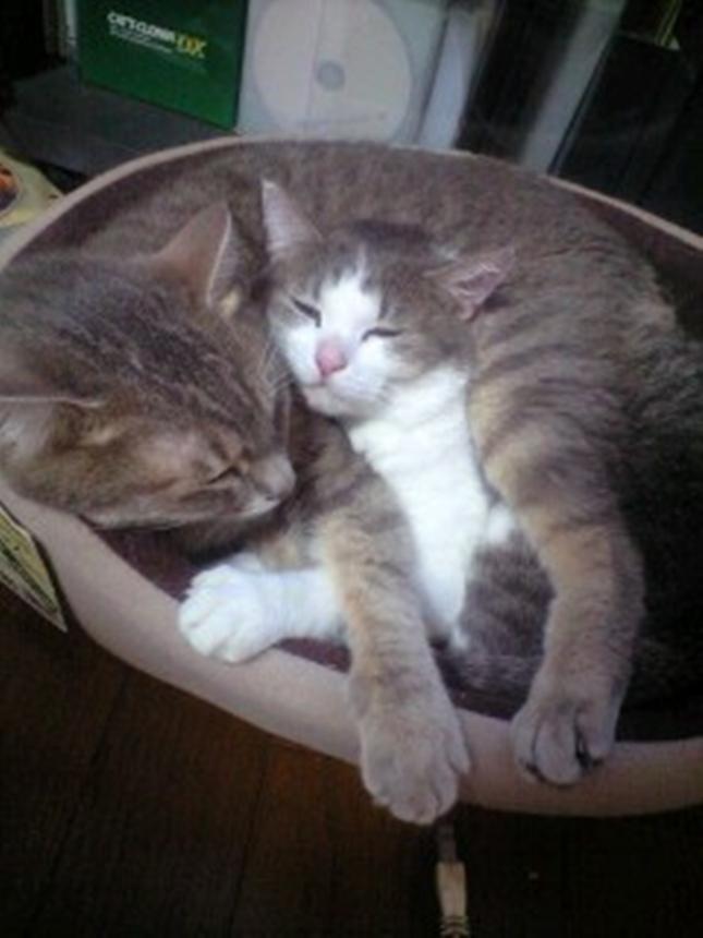 子猫inニャンモナイト