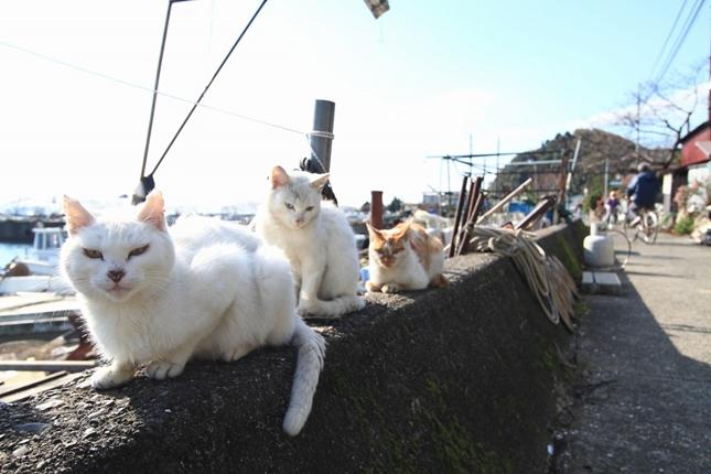 猫島日和。