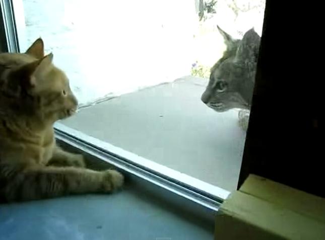 見つめる両者。