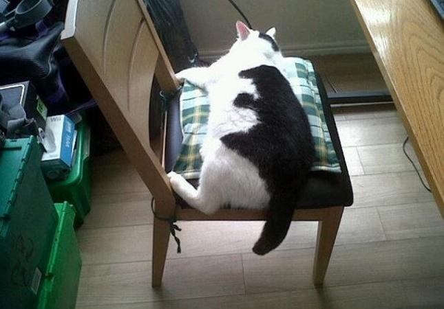 柄模様が奇跡の猫