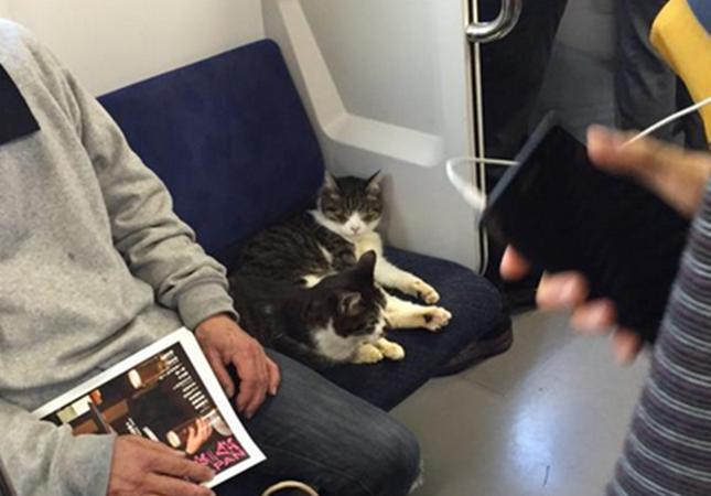 電車に乗る仲良し猫。
