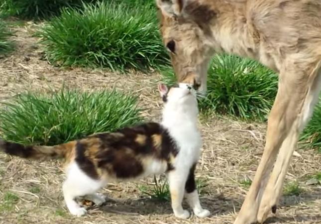 優しい鹿に甘えん坊な猫。