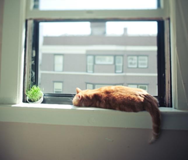 窓は猫の人気スポット。