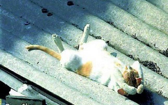 満喫しすぎな猫。