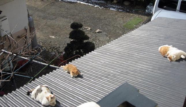 猫の集まる屋根。