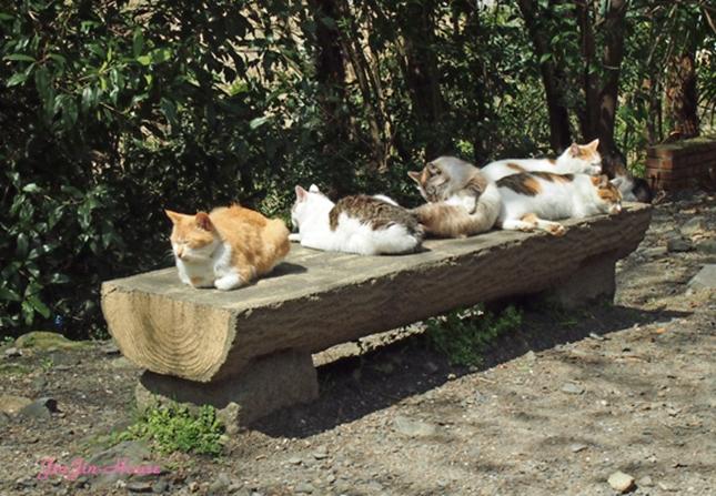 猫専用ベンチ。