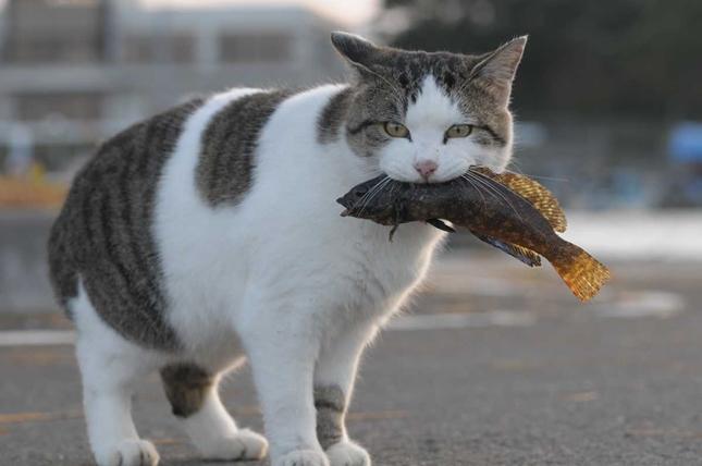 田代島の猫は豪快。