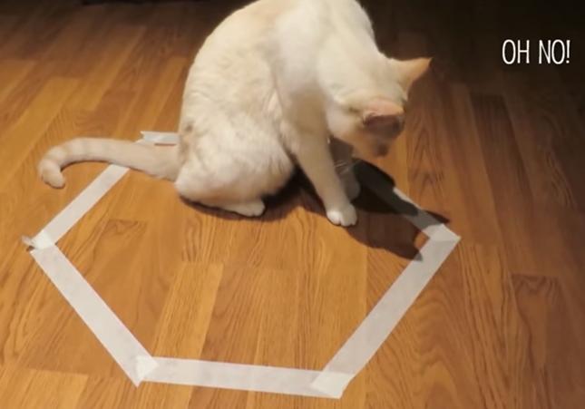 罠にハマッてしまった猫。