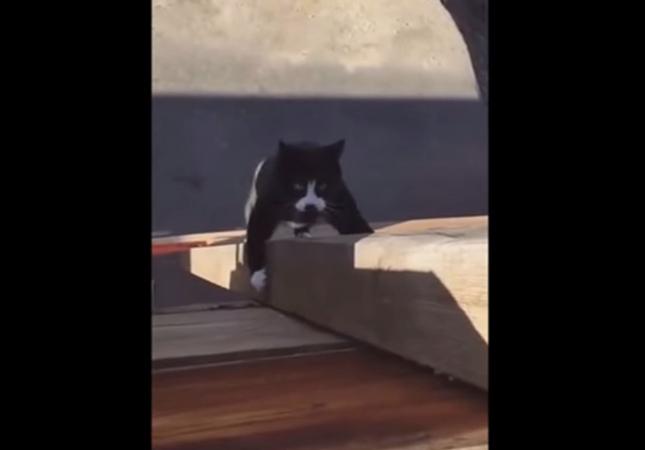 心なしかマッチョに見える猫。