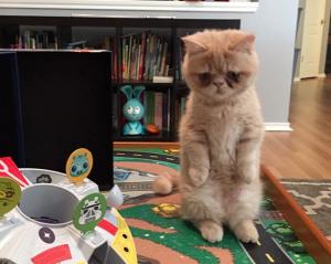 おもちゃと直立。