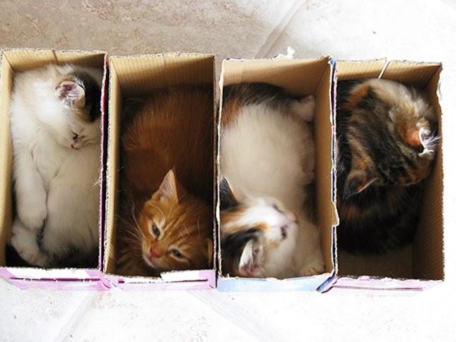 夢の一猫に一箱。