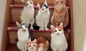 クラス写真のような猫達。