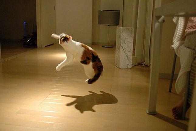 飛び跳ね!