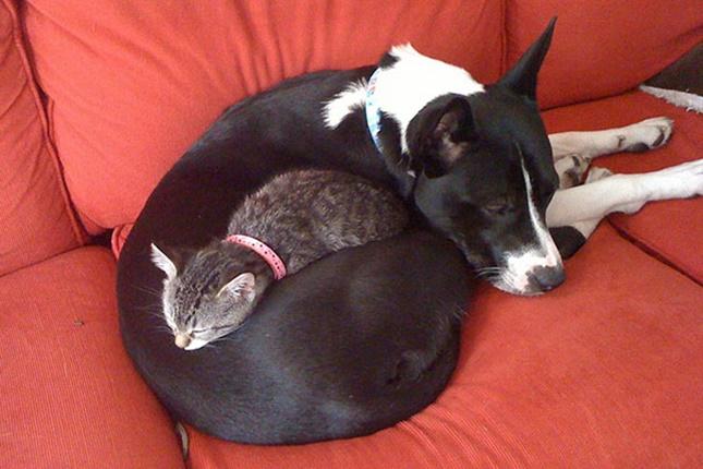 最高の寝心地を提供。