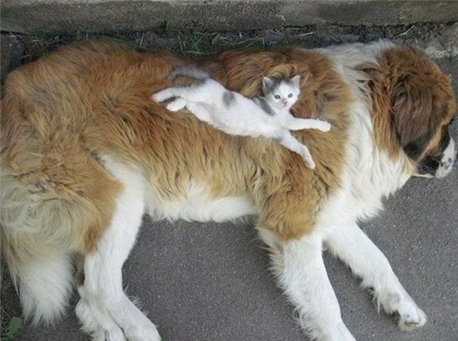 ふかふか犬ベッド。