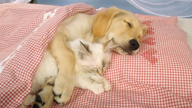 添い寝もしてくれる。