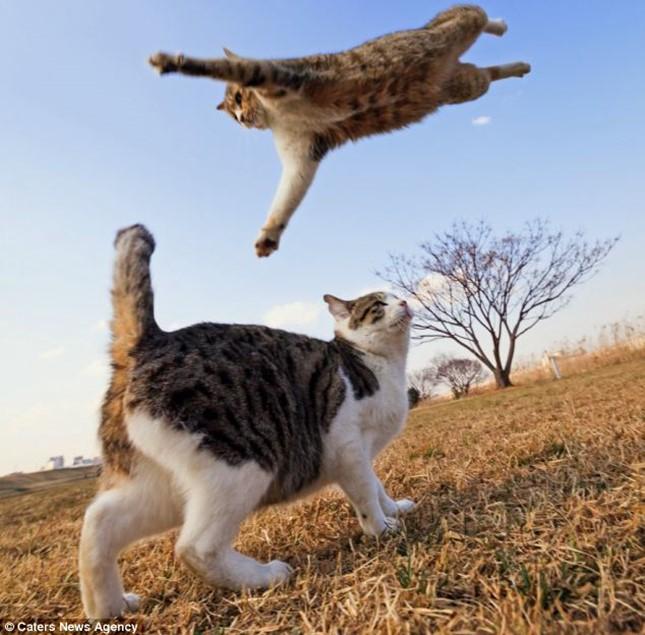 ジャンプアタック!