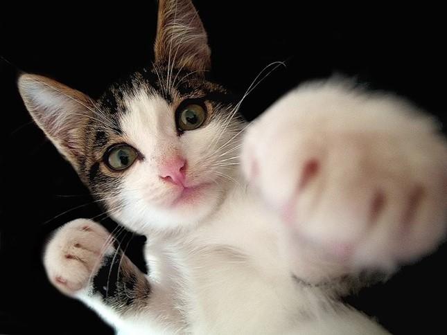 猫パンチ最強!