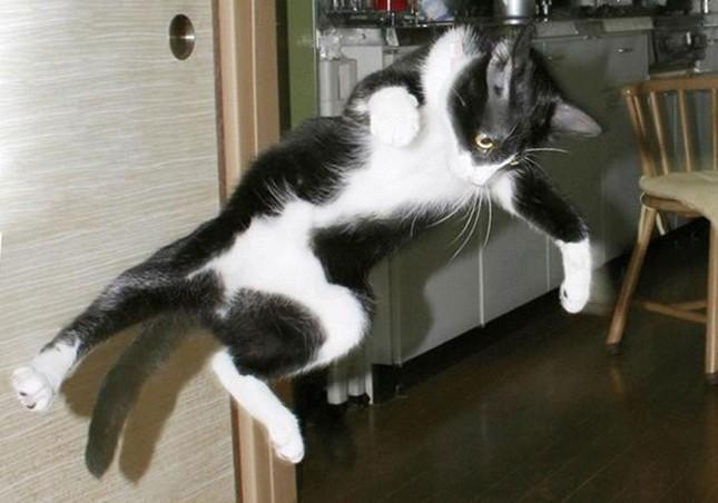 飛び蹴りっ!