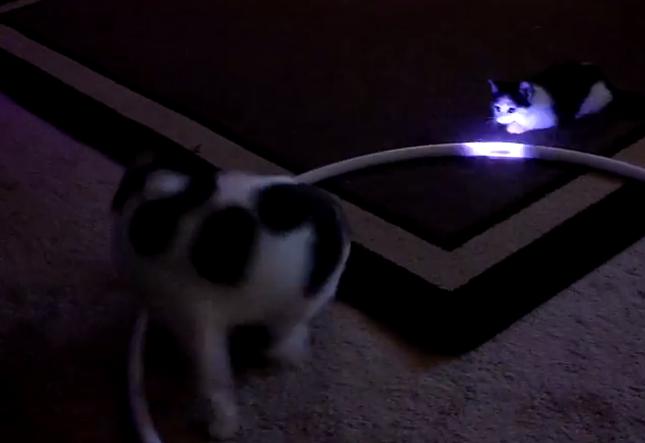 光に照らされる猫。