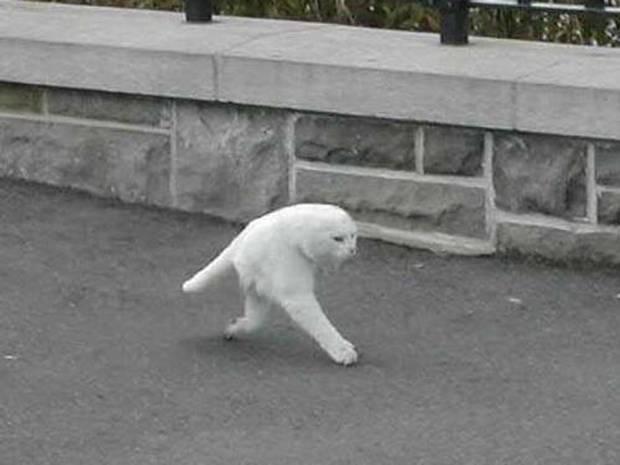ストリートビュー猫。